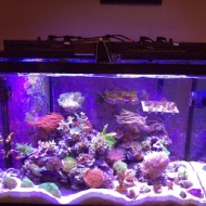 Reef Tank Cover